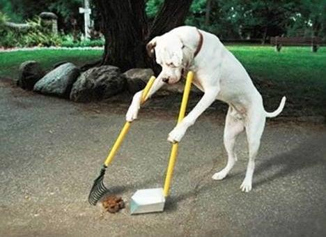 chien ramasse ses crottes