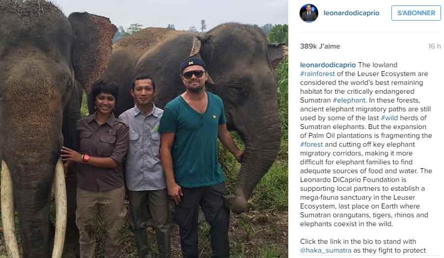 instagram-leo-sumatra