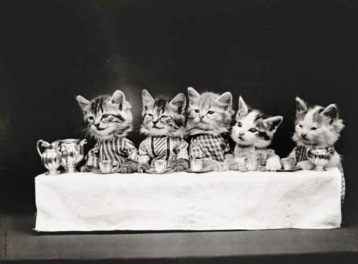 LOLcats--0