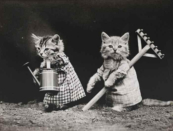 LOLcats--1