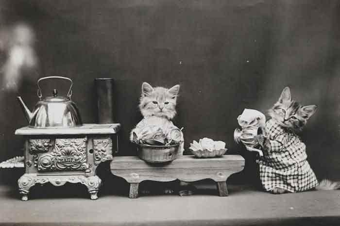 LOLcats--10