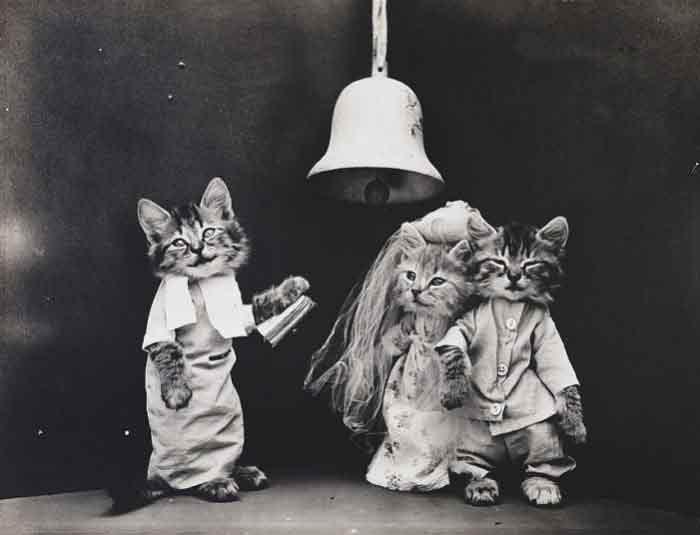 LOLcats--13
