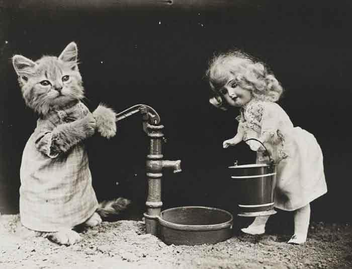 LOLcats--14