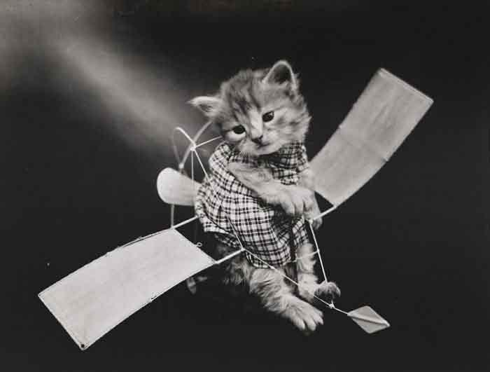 LOLcats--2