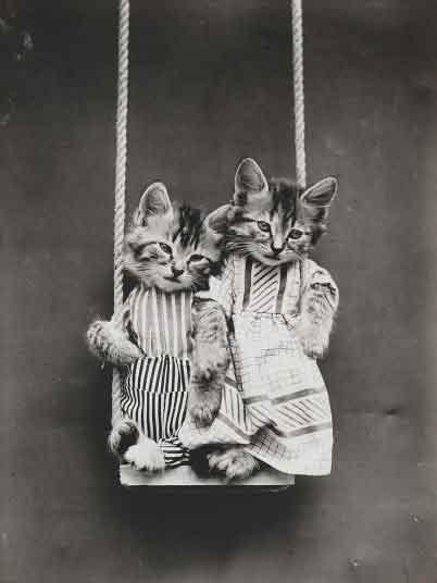 LOLcats--6