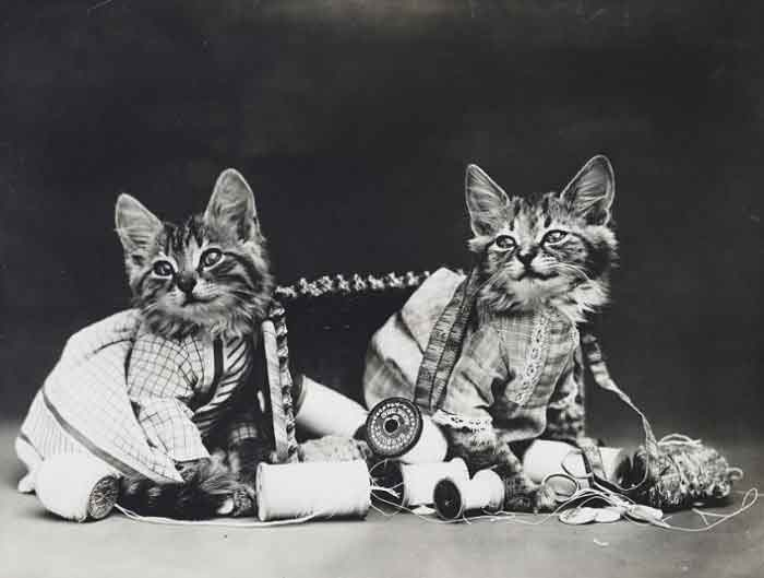 LOLcats--8