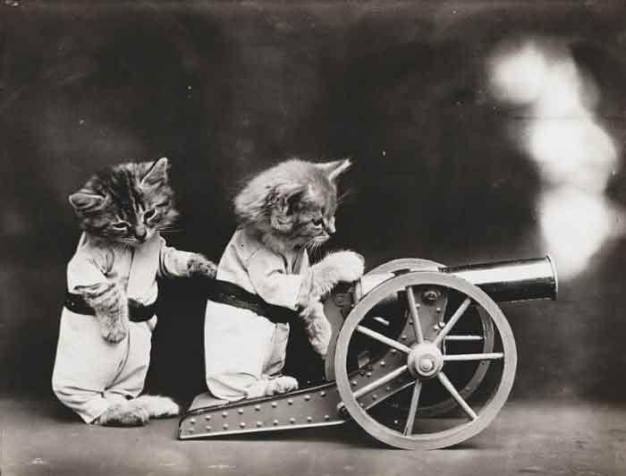 LOLcats--9