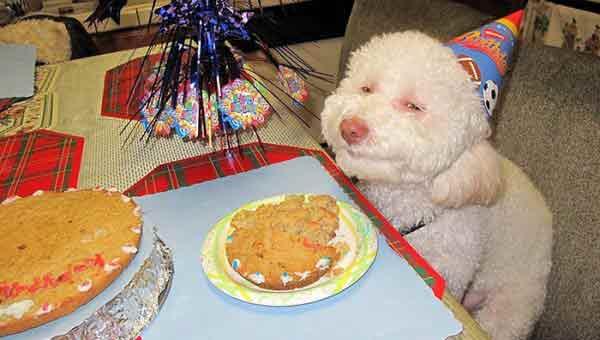 anniversaire-animal-0