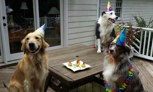 anniversaire-animal-10