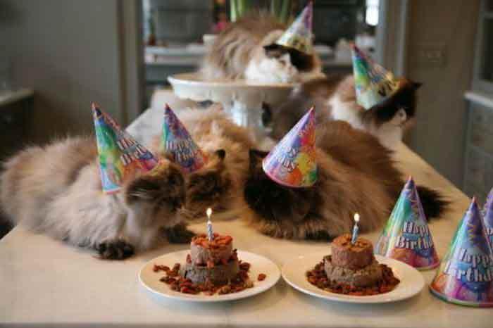 anniversaire-animal-13