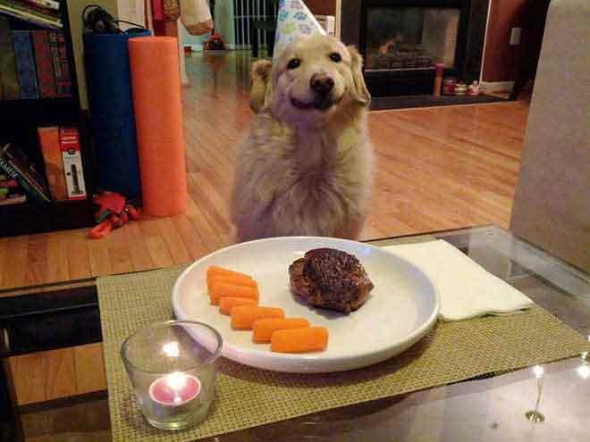 anniversaire-animal-2