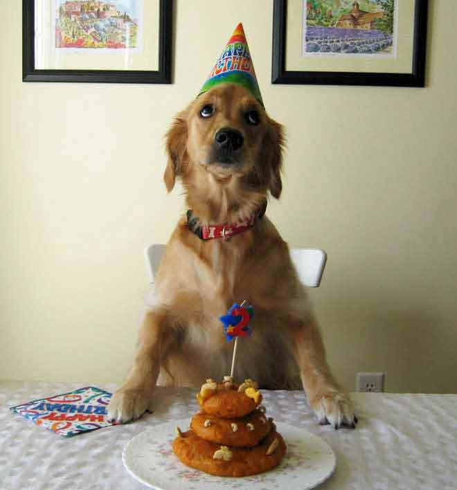 anniversaire-animal-5