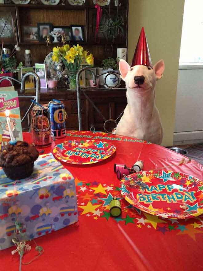 anniversaire-animal-7