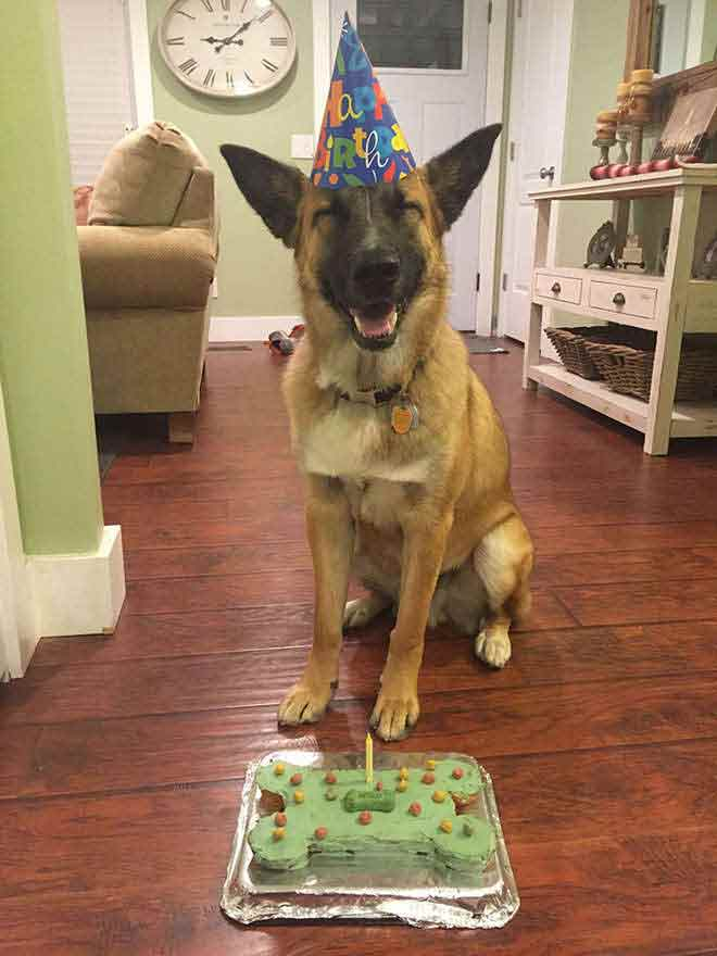anniversaire-animal