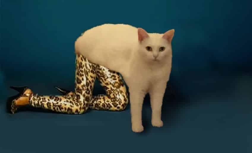 pauvre chat 1
