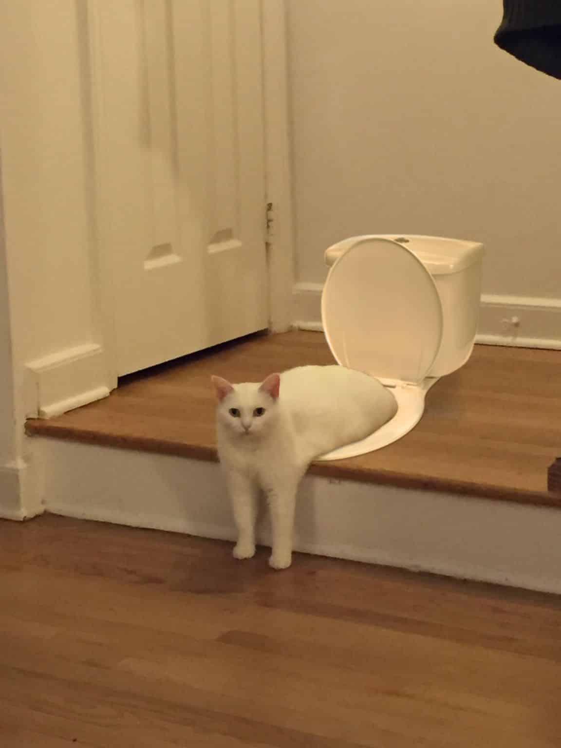 pauvre chat 5