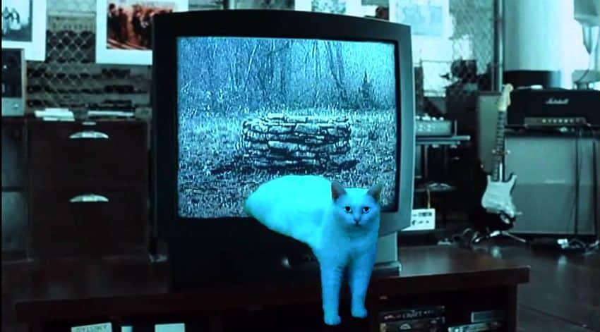 pauvre chat 6