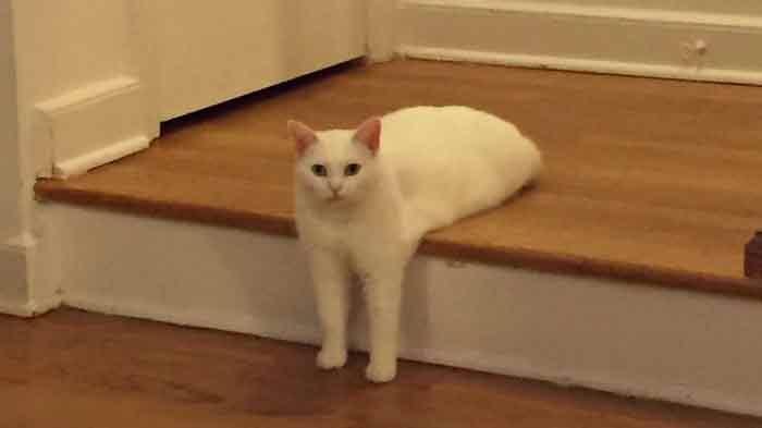 pauvre-chat
