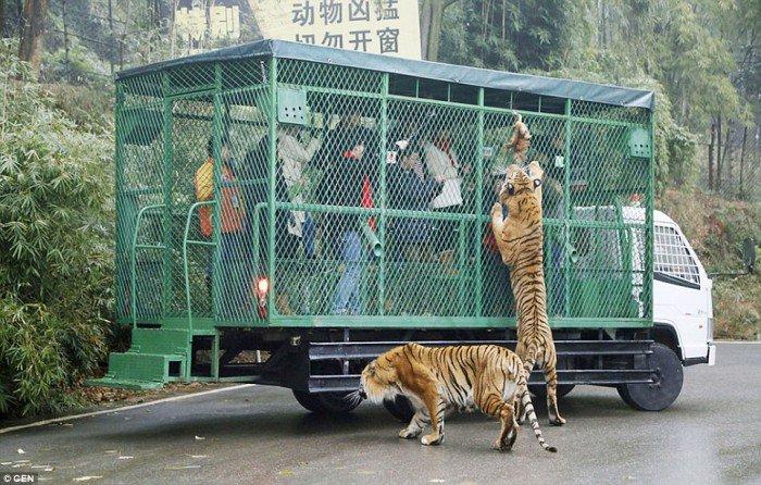 touristes en cage 3