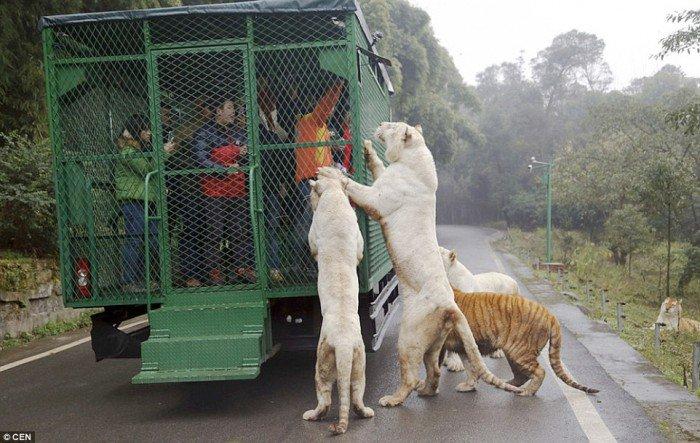 touristes en cage