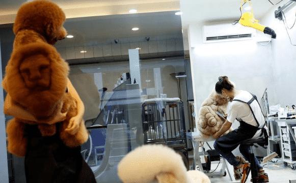 chien taiwan 2
