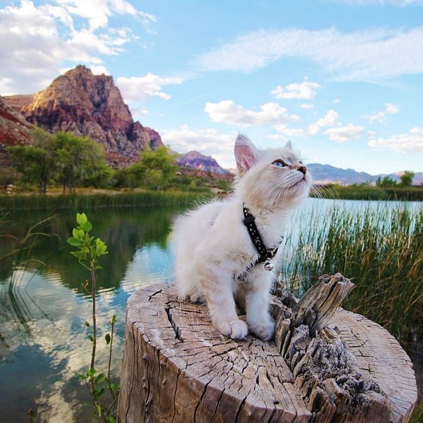 camping avec son chat 12