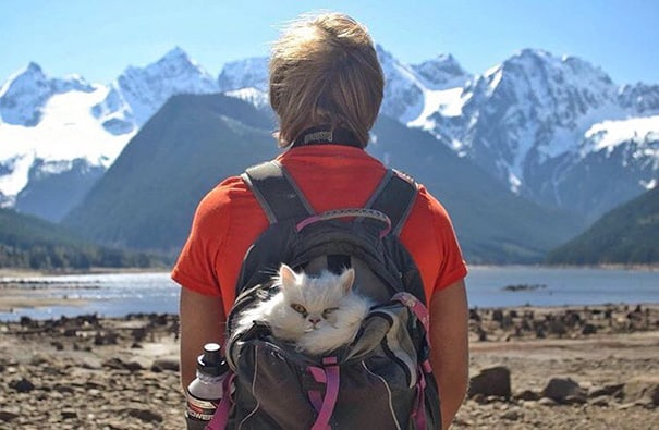 camping avec son chat 15