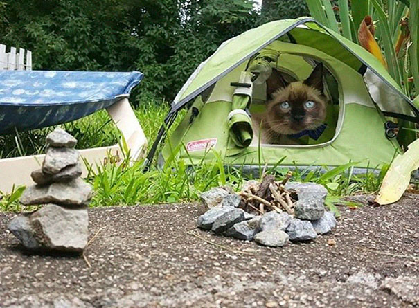 camping avec son chat 2