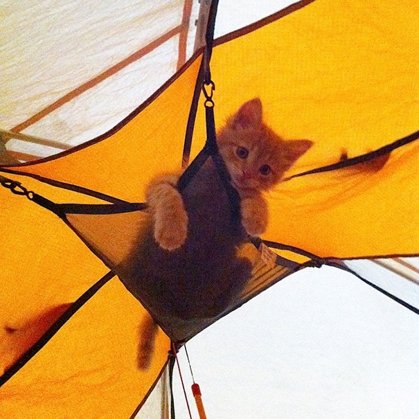 camping avec son chat 7