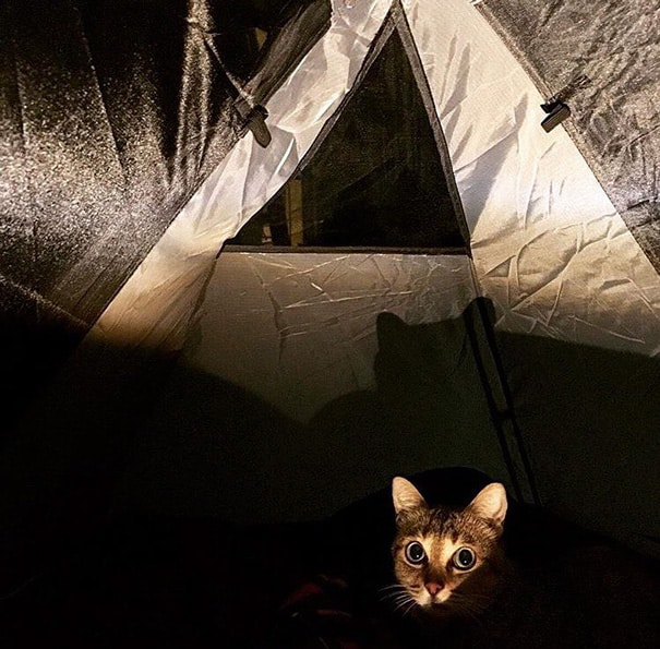 camping avec son chat 8
