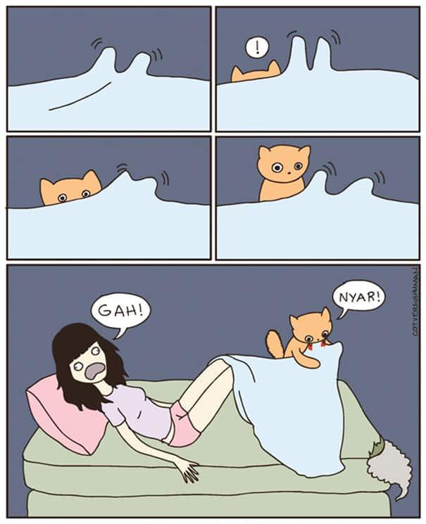 vie avec chat 13