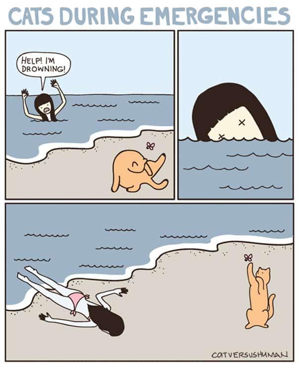 vie avec chat 3