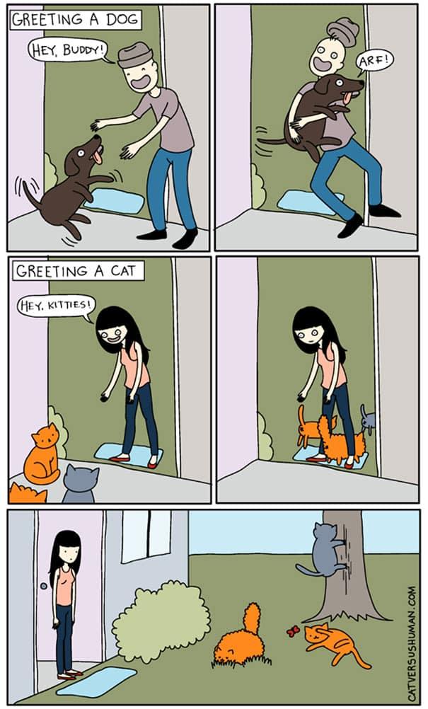 vie avec chat 5