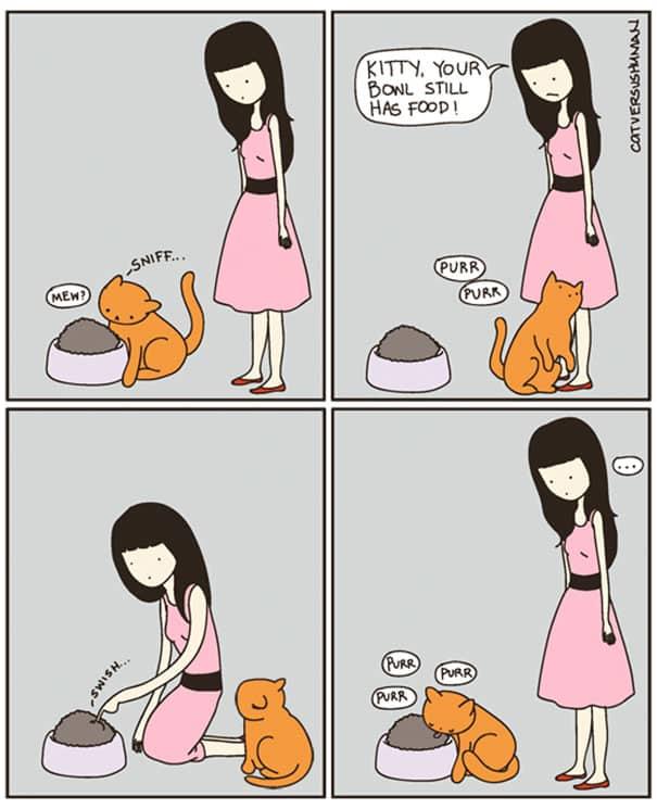 vie avec chat 6
