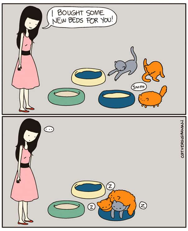 vie avec chat 9