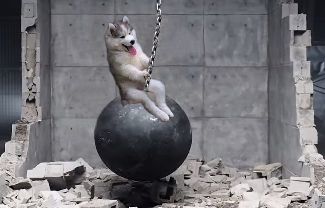 chien-perche-2