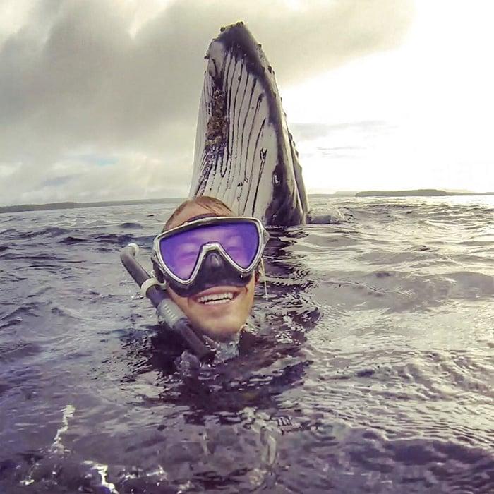 plongee avec baleines 1