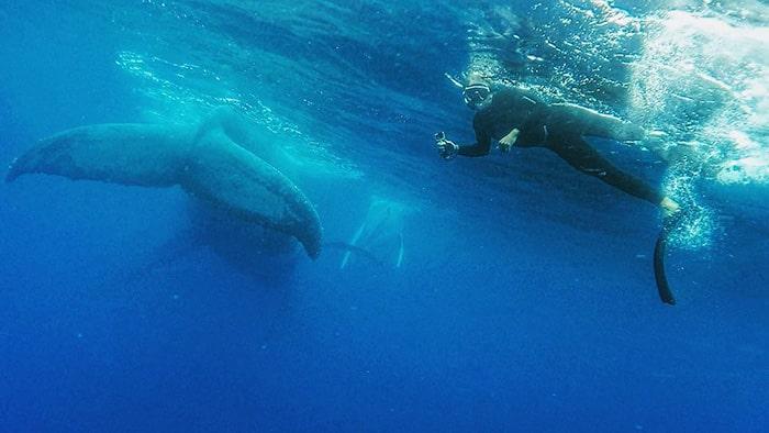 plongee avec baleines 3