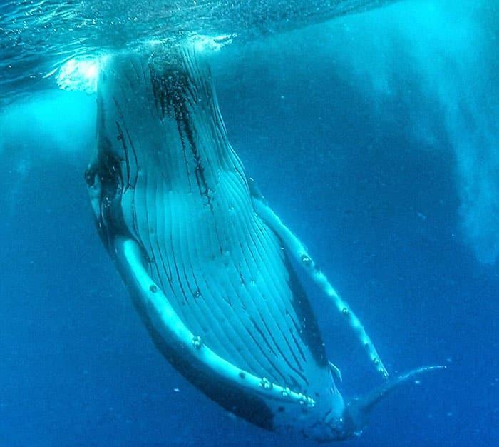 plongee avec baleines 4
