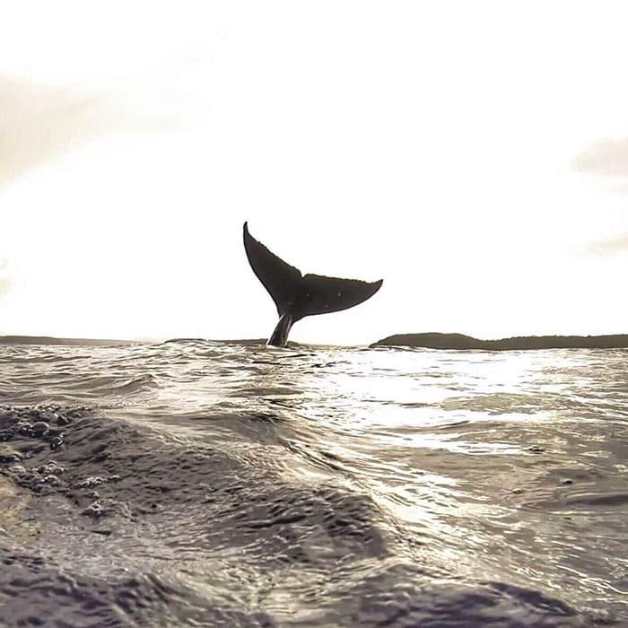 plongee avec baleines 5