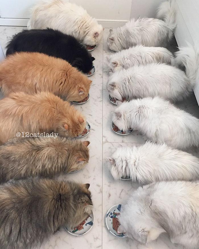12catslady-3