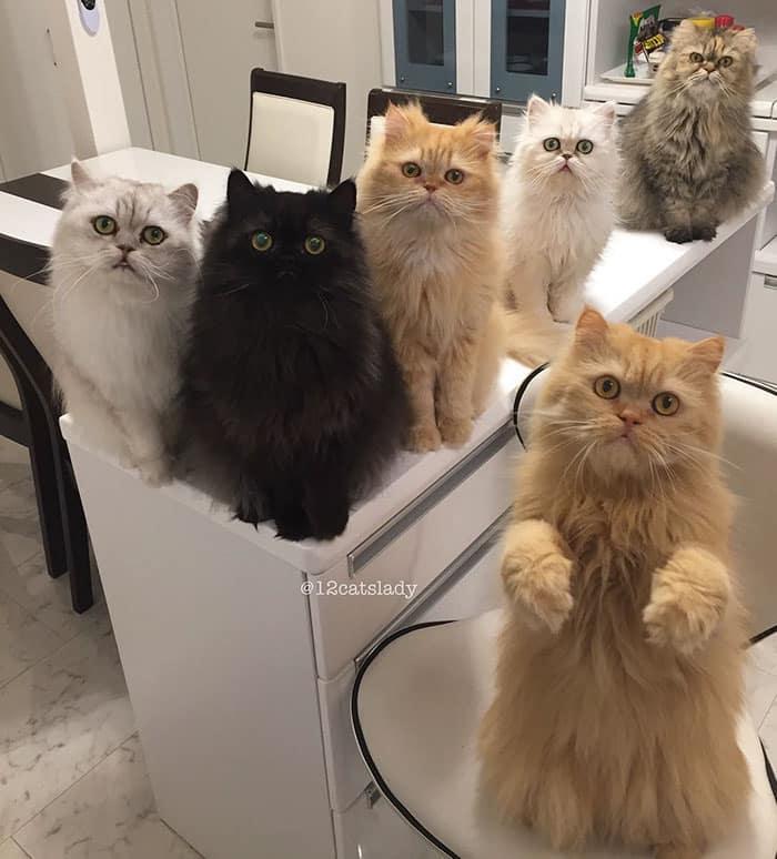 12catslady-8