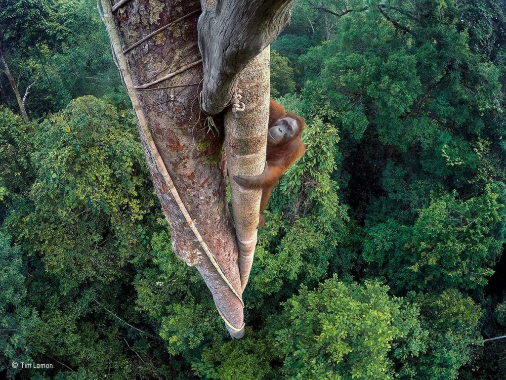 wildlife-photographer-of-the-year-2016-1