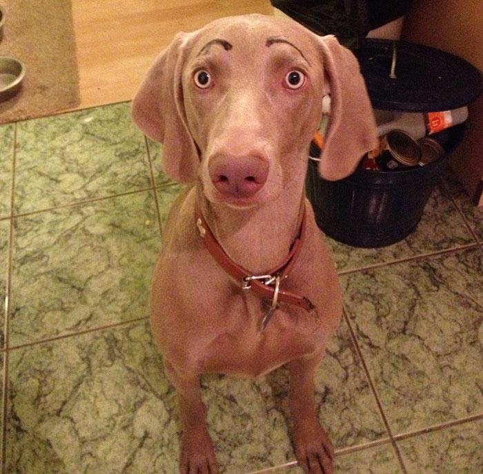 chien-avec-des-sourcils-11