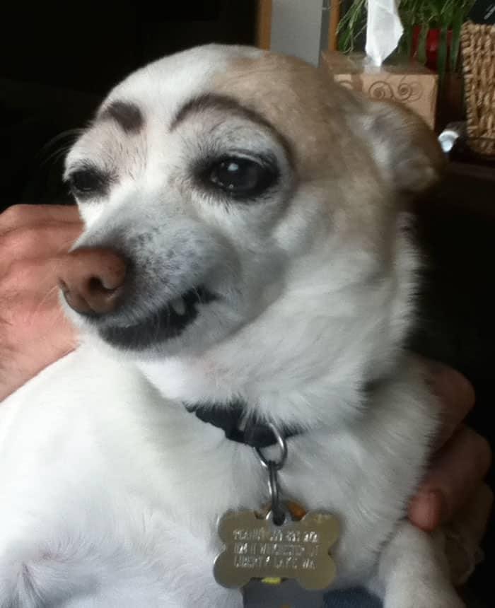 chien-avec-des-sourcils-4