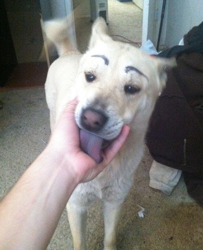 chien-avec-des-sourcils-9