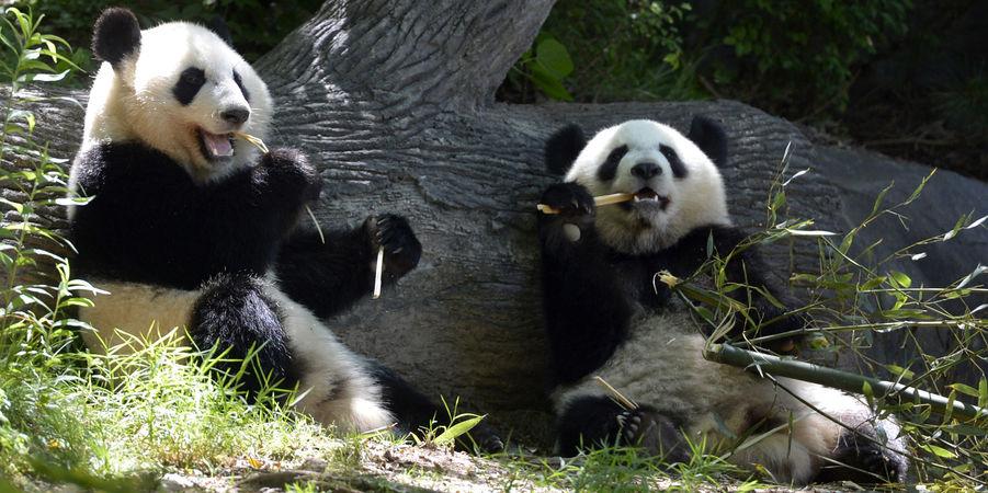 Mei Luan et Mei Huan