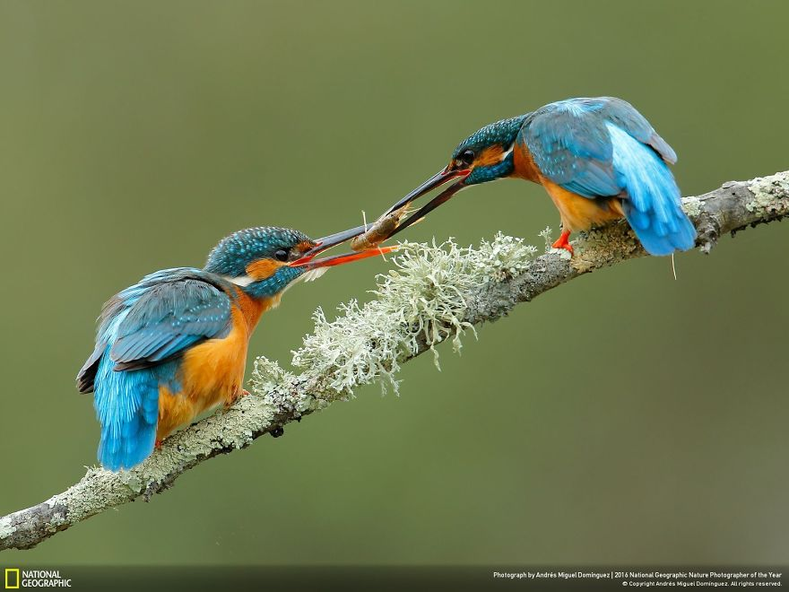 national-geographic-19
