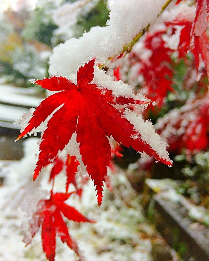 tokyo-sous-la-neige-6