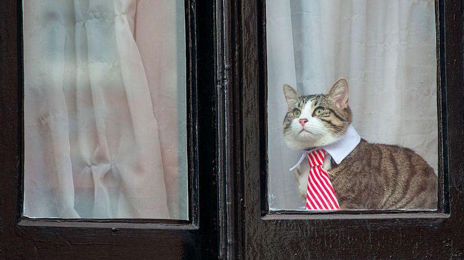 chat-cravate